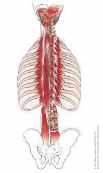 BeiBei  Cantieni wird das Skelett wird von der Mitte aus in die optimale Aufspannung gebracht und in der Tiefenmuskulatur vernetzt.